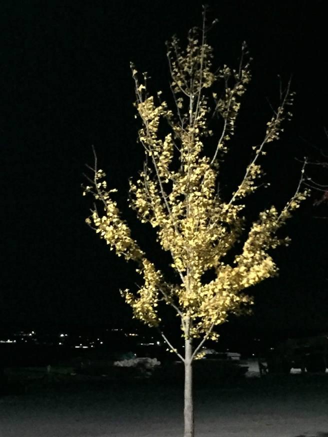 Yellow tree night
